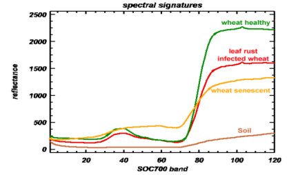 A comparison of relative reflectance between healthy and leaf rust infected wheat spectral signatures from 400-1000 nm showed a decreased reflectance for the infected wheat in the blue and green region of the visible spectrum and a strong decreased near-infrared reflectance plateau.
